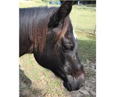 Horses for sale under $1000 | Cheap Horses for Sale