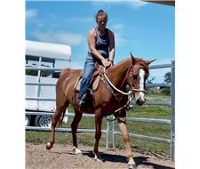 Chestnut mare up for sale