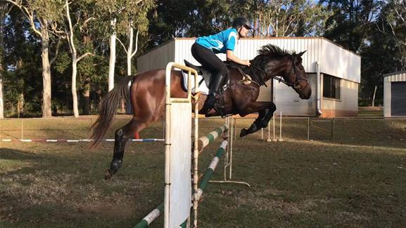 Point and Shoot Showjumper