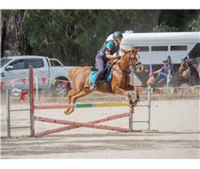 Talented Showjumper or Sporting Pony