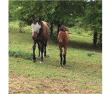 Sweet mare and lovely colt