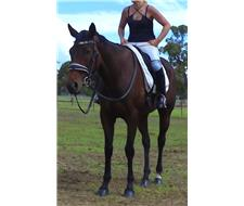 Missy: Bombproof Beginners Horse