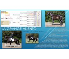 PRE breeding stallion imported 2015