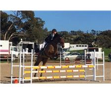 Schoolmaster Dressage / Eventing Mount