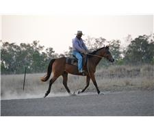 Unraced Thoroughbred Mare