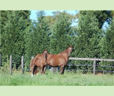 Super  IMPORTED broodmare/Donnerhall