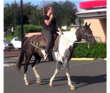 B and W PAINT QH GELDING