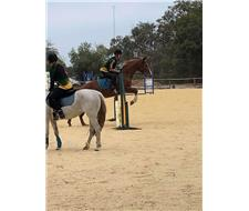 Jojo, Warmblood, mare