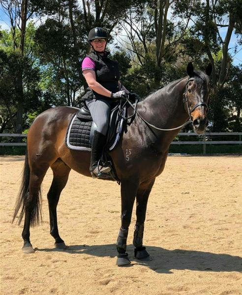 Royal Quality Gelding