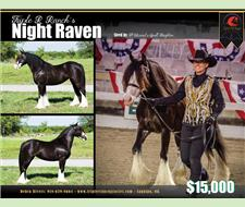Triple R Ranch's Night Raven