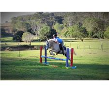 Quiet All Rounder Pony