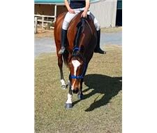 GOLDY: BOMBPROOF BEGINNERS HORSE