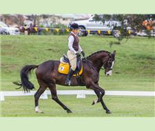 Eye-catching Dressage Gelding