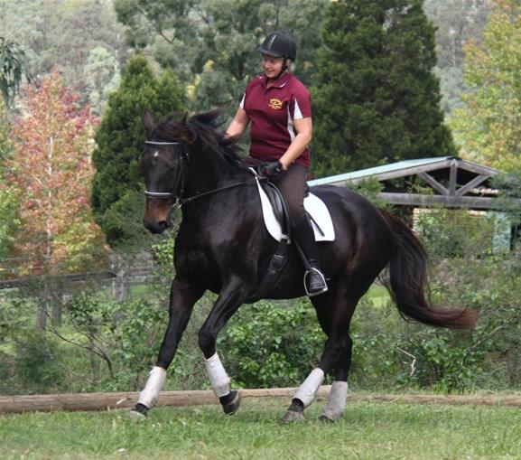 Well Educated Dressage Mare