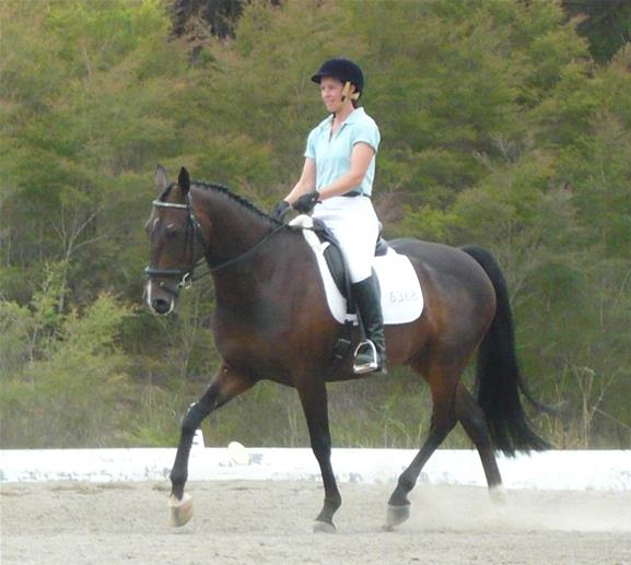 Educated Stock Horse Gelding