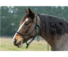 Horse Halter – Knotted Rope 8mm