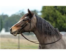 Leather Horse Bridles - Custom Made