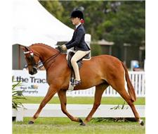 Champion Child's Large Pony