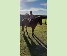 14hh childs or nervous adults pony.