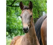 Stunning Versace Filly