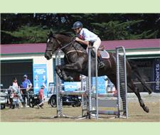 TALENTED SJ WARMBLOOD MARE