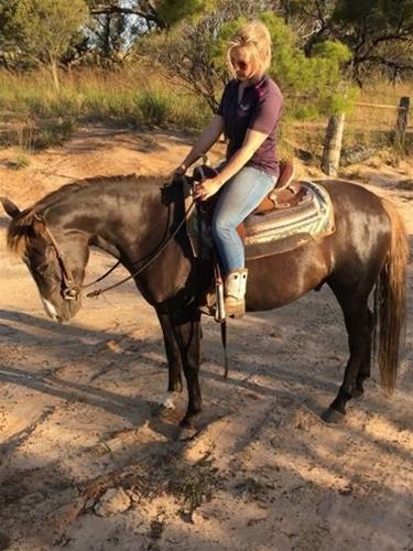 Trail Riding Gelding