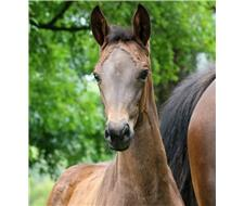 Versace x Fürst Love Filly