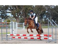 Ripper interschool/pony club pony