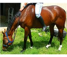 Horses For Sale | Price - 3000 00-6000 00 | PageSize - 100