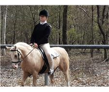 Registered Welsh Mare Section B