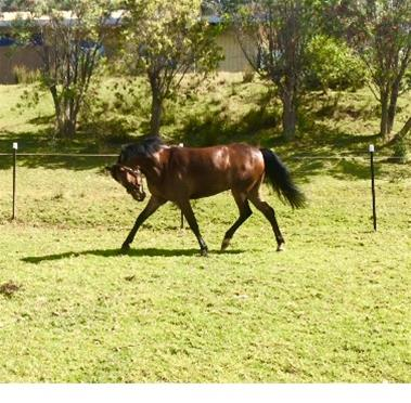 Show Pony - Reduced to sell ASAP