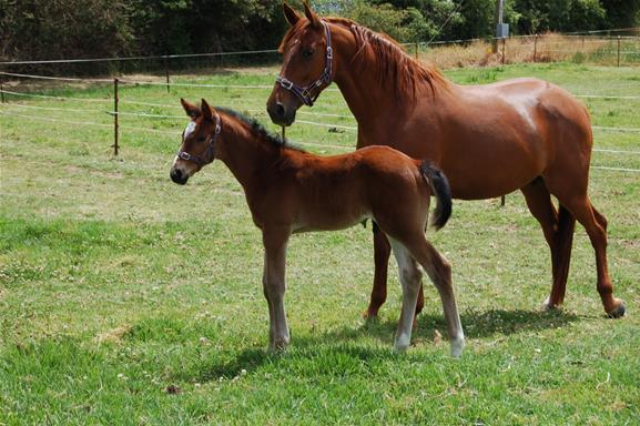 Top BROODMARE SUPER BLOODLINES