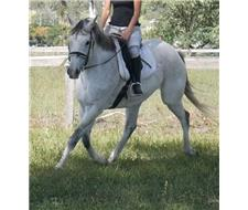 12 Bombproof Quiet Riding Horses