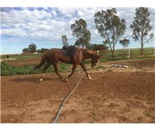 Chestnut Thoroughbred Gelding
