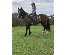 Sweet Natured Gelding