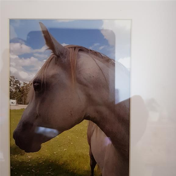 ANDAULSAIN  grey/PAINT quarter horse