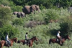 Giddy Up to Africa: Ride the African safari